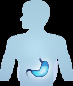 water digestive