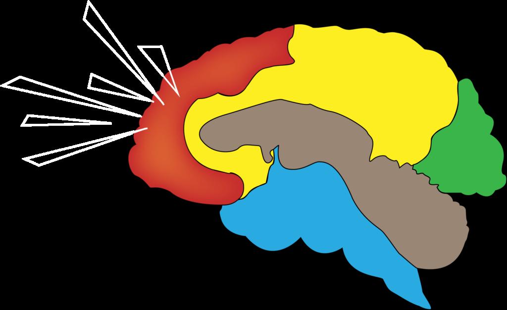 regiony mózgu