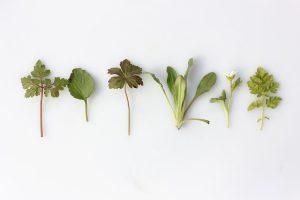 monatomic gold herbs - monatomic orme